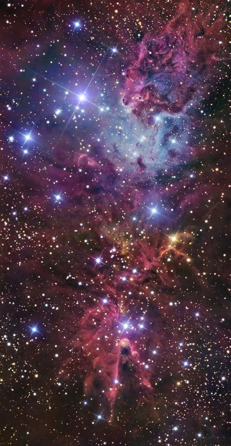 christmas tree nebula the tree cluster fox fur nebula and cone nebula in monoceros ngc 2264 the complex