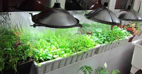 grow light indoor garden hid grow lights best for indoor gardens plant nutrients