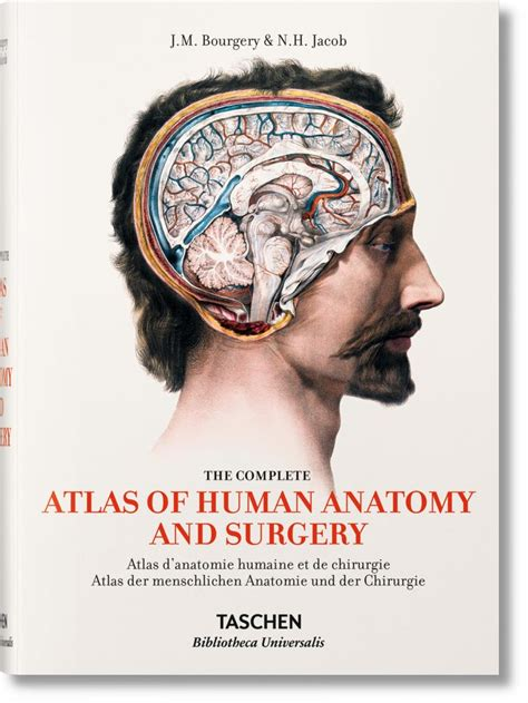 libro bourgery atlas of human best 25 atlas anatomy ideas on skeleton medical illustration and pelvis anatomy