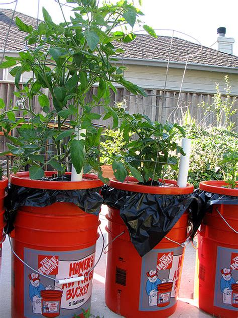 self watering container gardening those self watering containers they reduce the