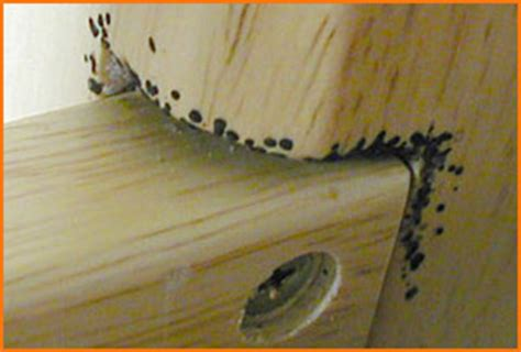 bedbug images bedbugme