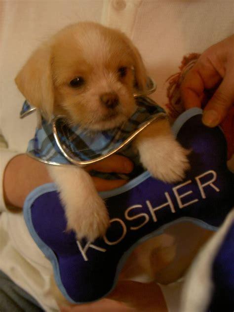 kosher dogs kosher by synchrochick007 on deviantart