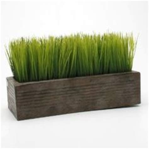 1000 images about wheatgrass on wheat grass