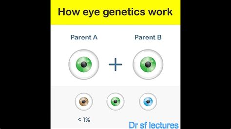 genetics of eye color how genetics works eye color genetics