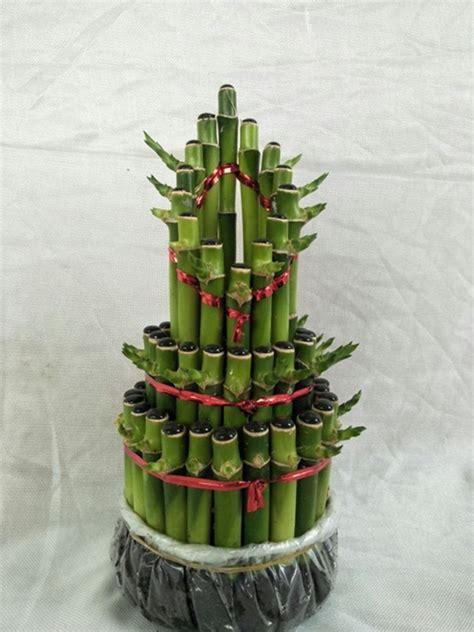 Tanaman Hias Bambu Hoki tanaman bambu hoki runcing 3t bibitbunga