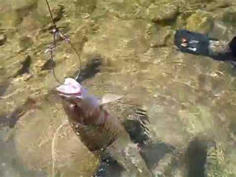 Pancing Ikan sebarau lubuk sebarau pancing ikan sebarau 2