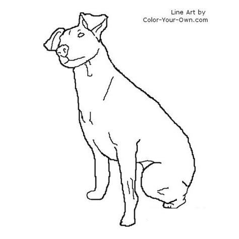 Rat Terrier Coloring Page Terrier Coloring Pages