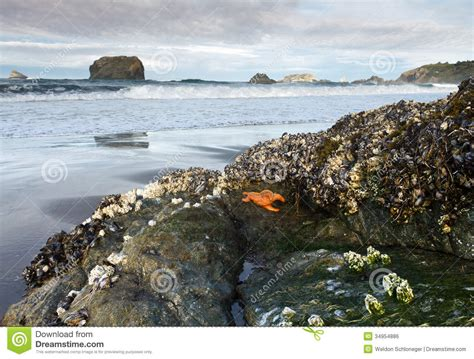 tide brookings oregon sea creatures on rock at low tide stock photo image of