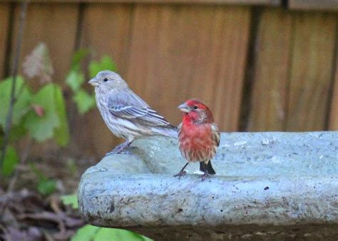 most common backyard birds red house garden common backyard birds of the eastern us
