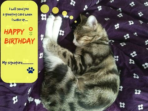 sleeping kitty birthday   belated birthday wishes ecards