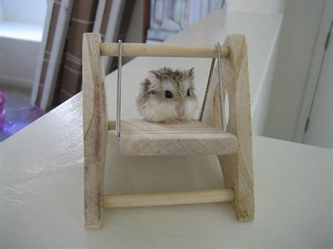 hamster swing diy wood hamster swing petdiys com