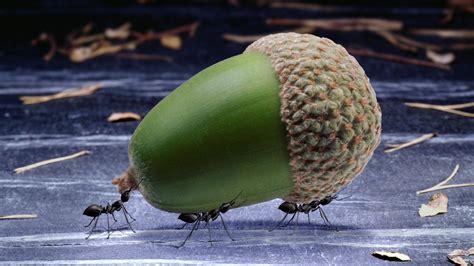 Ameisen Bekämpfen Terrasse