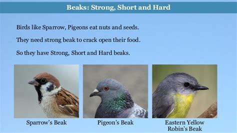 what do cracker beak birds eat environmental science evs birds class iii