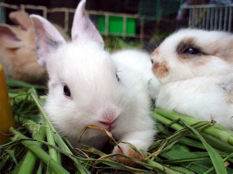 buy a house rabbit rabbit hutches the lowdown on rabbit hutches
