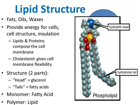 lipids diagram lipids ppt