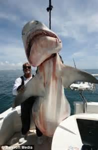 mako vs sea hunt boats florida s real shark hunter he s caught nearly 100 000