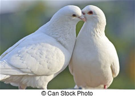 doves stock photo images 31 167 doves royalty free images