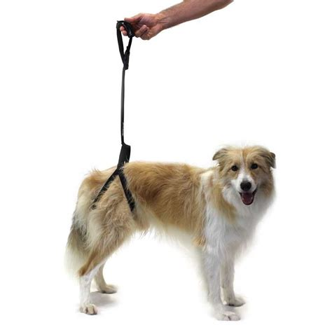 support harness ortocanis rear support harness for dogs