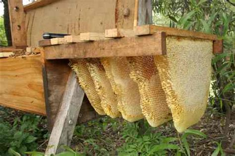 top bar bee keeping the survivalist s guide to raising honey bees