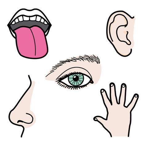 imagenes infantiles sobre los sentidos los sentidos en lse lengua de signos espa 241 ola