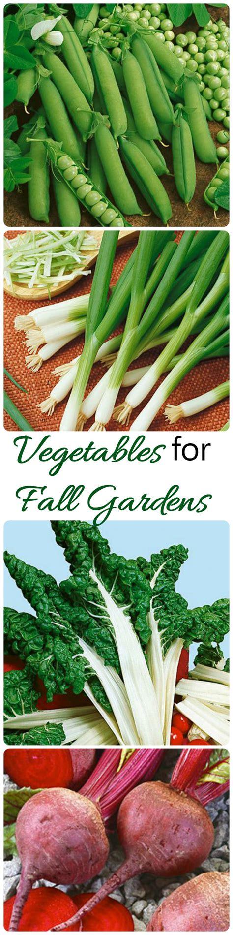 Fall Gardens What Vegetables To Plant Now The What To Plant In Vegetable Garden Now