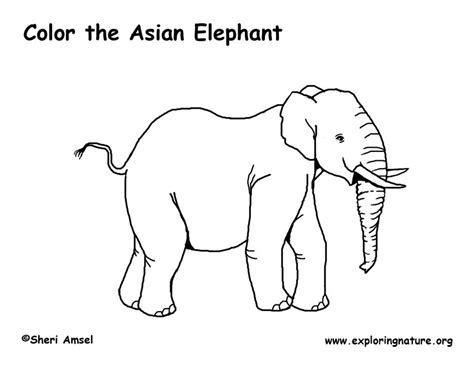 Asian Elephant Coloring Page | asian elephant coloring page