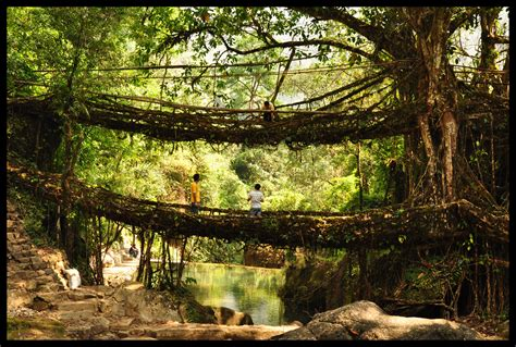 living bridges living root bridges speakzeasy