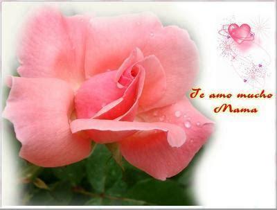 fiori virtuali come inviare fiori virtuali gratis 5 passi