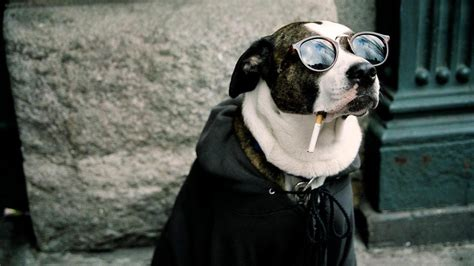 all wallpapers funny dogs wallpapers funny dog hd wallpaper welcome to starchop