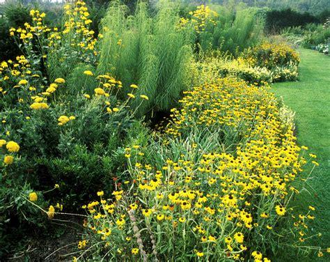 14 Cheerful Yellow Garden Flowers Yellow Garden Flowers