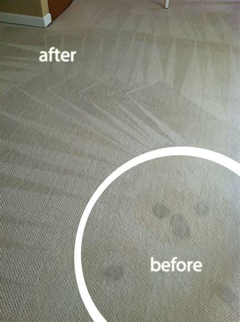 upholstery cleaning chaign il carpet cleaning danville il carpet vidalondon
