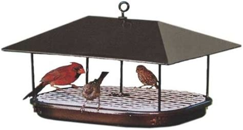 best bird feeding tips for winter