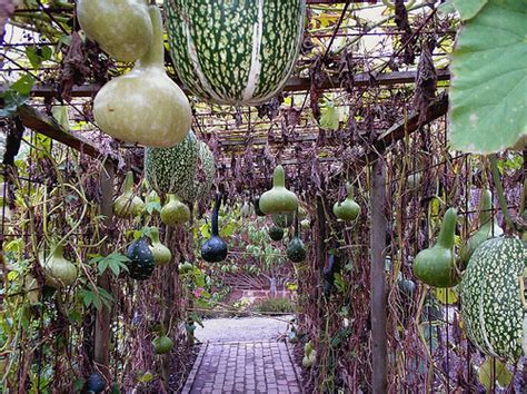 Hanging Vegetable Gardens Hanging Vegetable Garden Flickr Photo Sharing