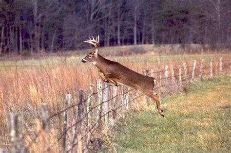 jumping fence big buck jumping fence big bucks