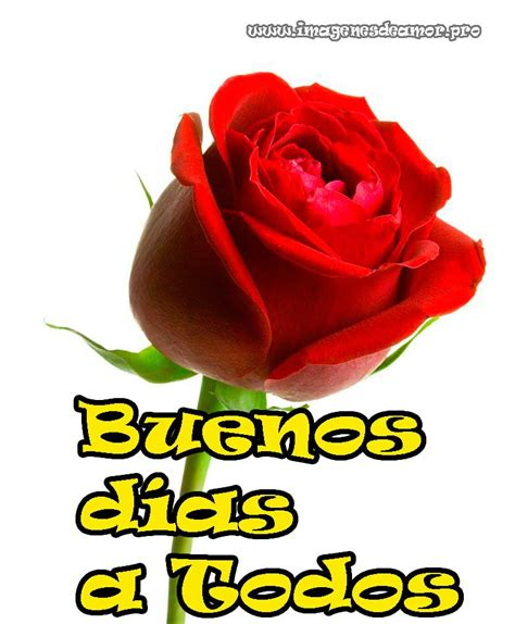 imagenes de rosas que digan buenos dias im 225 genes de rosas para desear buenos d 237 as