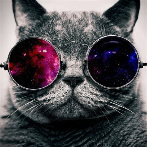 wallpaper cat with sunglasses 8tracks radio story of the curious space cat 17 songs