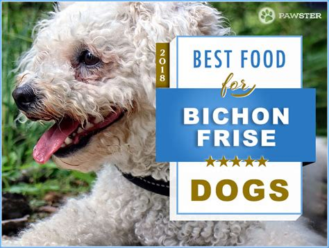 best times to feed a puppy 6 best foods to feed your puppy and bichon frise