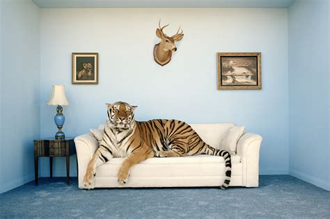 tiger room the 10 best home ins by animals realtor 174