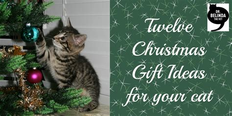 12 christmas gift ideas for your cat dr belinda the vet