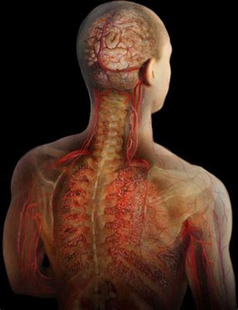 imagenes virtuales del cuerpo humano tenerifeosteopata anatom 237 a im 225 genes del cuerpo humano