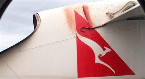 film ular di pesawat ular piton ini bergelantungan di sayap pesawat