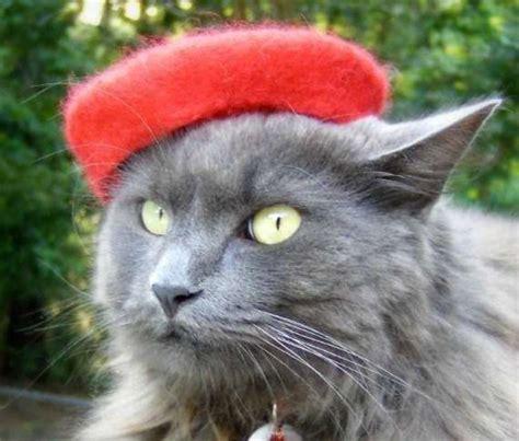 Cat Beret Hat feline fedoras cat berets