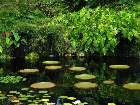 Miami Botanic Garden 25 Best Things To Do In Miami Florida The Tourist