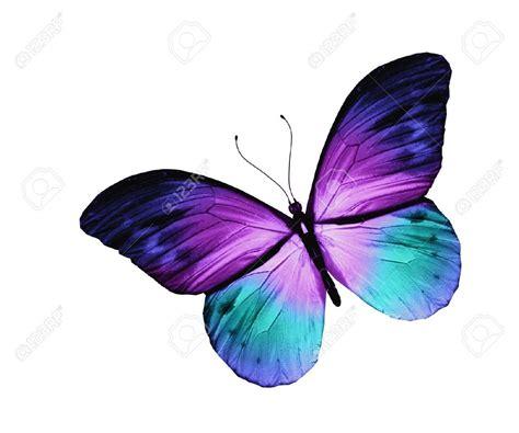 imagenes de mariposas moradas y azules mariposa ejercicio pinterest mariposas tatuajes y