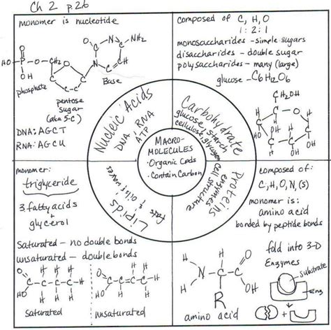 Macromolecules Worksheet by 1000 Images About Ap Biology On