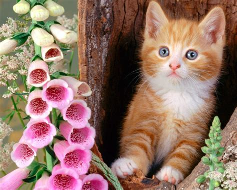 animal cat hd pictures  gallery