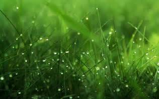 Image grass hd wallpapers and stock photos pictures to pin on