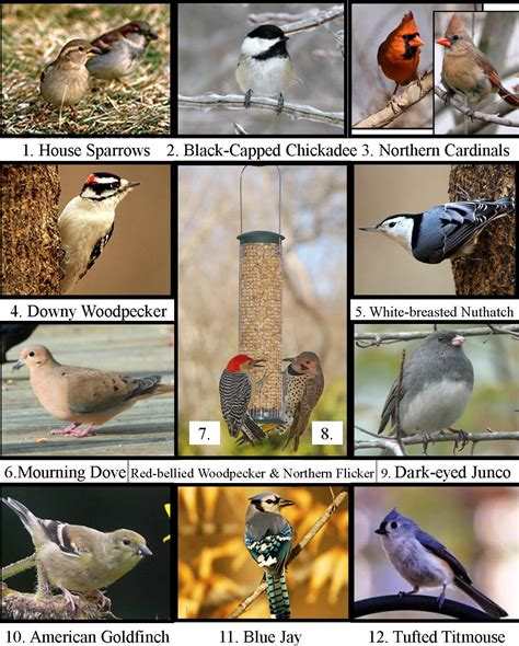 michigan backyard birds wild birds unlimited what bird is singing outside my