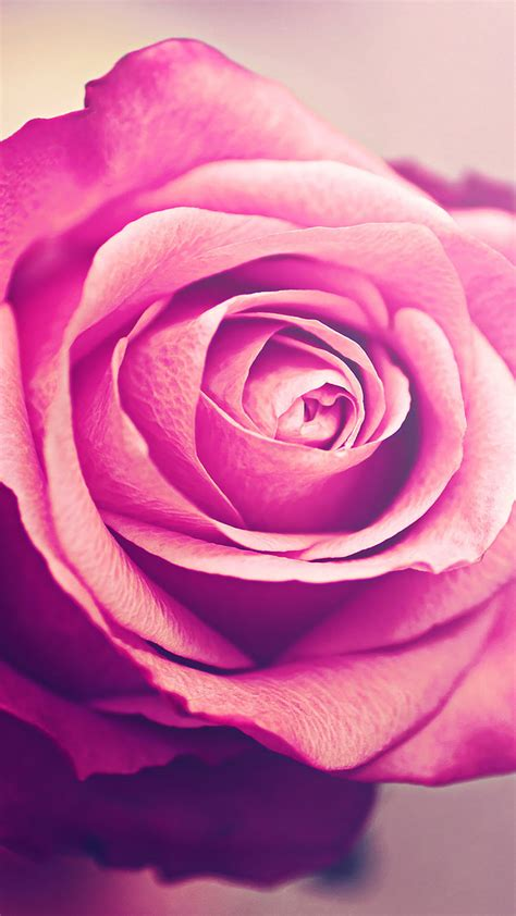 wallpaper romantic pink roses pink romantic rose wallpaper for iphone x 8 7 6