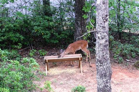 Backyard Deer Feeder by Vacation Rental In Lake Lure Near Chimney Rock